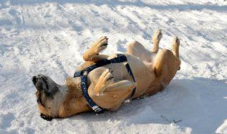 Hundepfoten imWinter mit Vaseline schützen (Foto)