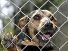 hund.JPG (Foto)