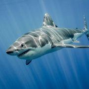 17-Jährige von Hai getötet - Familie muss hilflos zuschauen (Foto)
