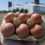 In Belgien und den Niederlanden produzierte Eier sind mit Biozid belastet. (Foto)