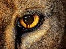 """In der Doppelfolge """"Allianz der Tiere"""" und """"Angriff der Leoparden"""" könnten Jackson, Abraham und die anderen endlich den Schlüssel zu einem Heilmittel gegen die Mutation gefunden haben. (Foto)"""