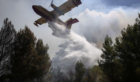 In Griechenland, Portugal und Italien haben Waldbrände bereits unzählige Quadratkilometer Wald- und Wiesenfläche vernichtet. (Foto)