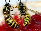 Insektenplage (Foto)