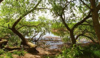 Insel Usedom (Foto)