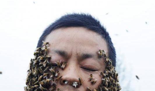 Insgesamt 33,1 Kilo Bienen sind um seinen Körper geflogen und krabbelten über seine Haut. (Foto)