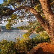 Über 1000 Jahre! Forscher entdecken ältesten Baum Europas (Foto)