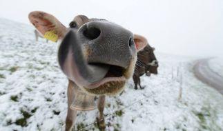 Ist das wirklich schon Schnee? Die Twitter-Gemeinde ist sich nicht sicher. (Foto)