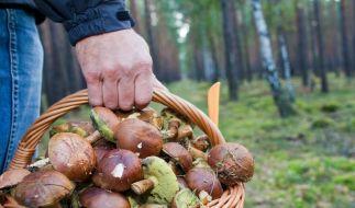 Jäger warnen vor ungewaschenen Pilzen und Beeren (Foto)