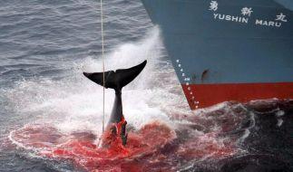Japan weist Forderung nach Ende des Walfangs zurück (Foto)