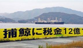 Japan Whaling (Foto)