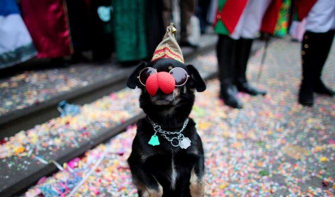 Jecker Hund (Foto)