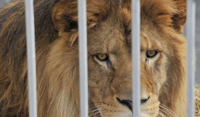 Kabinett beschließt strengere Tierschutzregeln (Foto)