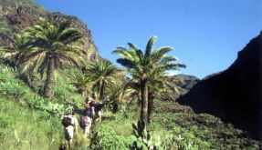 Kanarische Inseln - La Gomera (Foto)