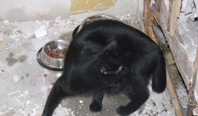 Katze versehentlich eingemauert (Foto)
