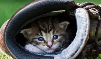 Katze (Foto)