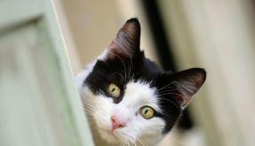 Katzen als Überträger (Foto)