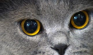 Katzen vor trockener Heizungsluft schützen (Foto)