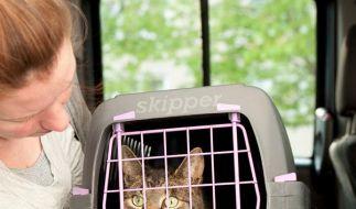 Kein Terror beim Transport - Tiere früh an Box gewöhnen (Foto)
