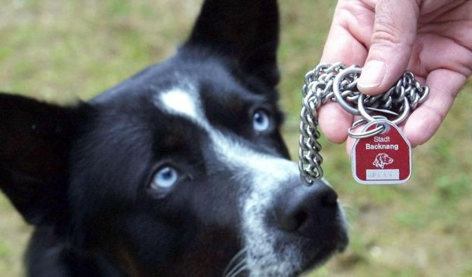 Klage gegen Hundesteuer vor EGMR eingegangen (Foto)