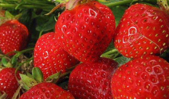 Klarer Fall: Schuld am massenhaften Brechdurchfall in Deutschland tragen importierte Tiefkühl-Erdbeeren. (Foto)