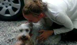 Kleiner Hund, riesige Freude: Für Schnauzer Casey wurde das Wiedersehen mit Frauchen Rebecca Ehalt fast zu viel. (Foto)