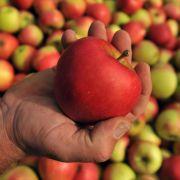 Köstlicher Fitmacher im Herbst: Äpfel sind nicht nur vitaminreich, sondern auch perfekt zum Backen.