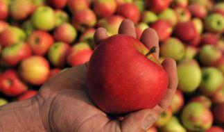 Köstlicher Fitmacher im Herbst: Äpfel sind nicht nur vitaminreich, sondern auch perfekt zum Backen. (Foto)