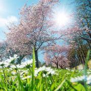 Sonne oder Schnee? Das prophezeit der Hundertjährige Kalender (Foto)