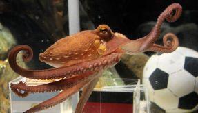 Kraken orakeln zur Frauen-WM (Foto)
