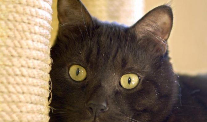 Krallenwetzen kann bei Katzen ein Zeichen für Protest sein (Foto)