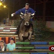 Gefährliches tierisches Vergnügen: Der Schweizer Bruno Isliker reitet mit seiner KuhSybille über Hindernisse.