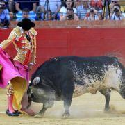 Ruhm für den Stier, Hass für toten Torero (Foto)