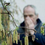 Gegen diese Pollen sollten sich Allergiker wappnen (Foto)