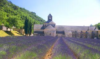 Lavendelblüte (Foto)