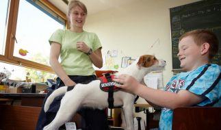 Lehrer-Star auf vier Pfoten: Schulhund Aila (Foto)