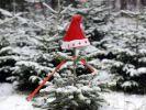 Leider eher grün als weiß wird das das diesjährige Weihnachtsfest, so Meteorologen. (Foto)