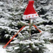Leider eher grün als weiß wird das das diesjährige Weihnachtsfest, so Meteorologen.