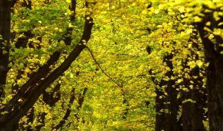 Licht bringt müdes Hirn auf Trab (Foto)