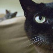 Diese Bilder wurden mit dem Lytro-Prototypen aufgenommen. DerEffekt wird an den Katzen deutlich. Hier ist die vordere Katze scharf, ...