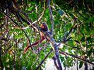Mehr Regenwald (Foto)