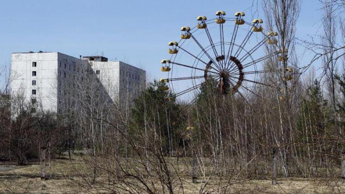 Menschen leben in der Sperrzone um das Atomkraftwerk Tschernobyl nicht - wohl aber eine Vielfalt auch seltener Tiere und Pflanzen. Auf einige Vögel scheint die Strahlung gar positiv zu wirken, berichten Forscher. (Foto)