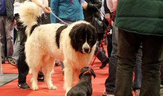 Messe-Highlights: Alles für den Menschen im Tier (Foto)