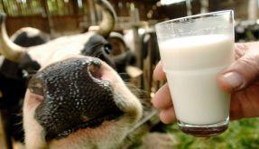 Milch hat weniger positive Auswirkungen auf unseren Körper, als bisher angenommen. (Foto)