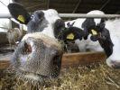 Milchpreis (Foto)