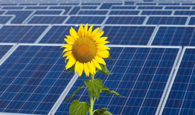 Ministerium: Kürzung der Solarförderung fällt aus (Foto)