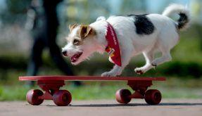 Unterhaltung für Hunde allein zu Haus