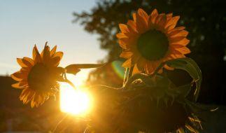 Mit etwas Glück kommt in den nächsten Tagen der sonnige Altweibersommer zu uns. (Foto)