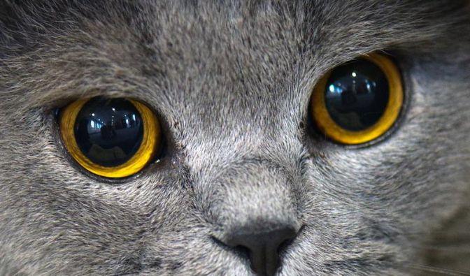 Mit Katzen in der Küche streng sein (Foto)