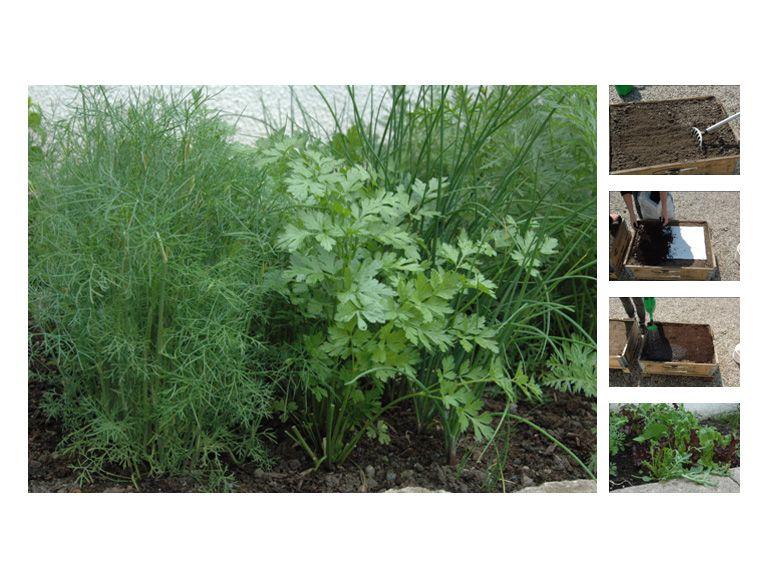spielerei der woche kr uter anpflanzen ganz ohne gr nen daumen. Black Bedroom Furniture Sets. Home Design Ideas
