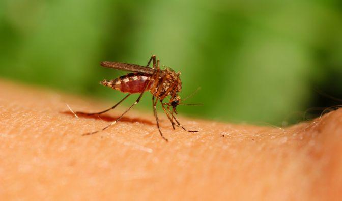 Mit der ThermaCell Mückenlaterne gehören dieser Bilder der Vergangenheit an. (Foto)